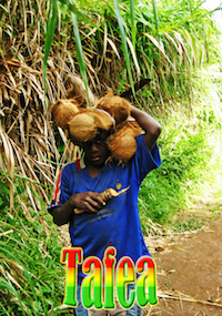 Tafea Directory Cover